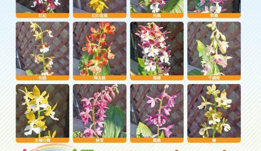 2021年4月15日(木)・16日(金)・17日(土)「花と緑のマーケット」が開催されます!